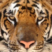 'Tiger King' and the importance of Estate Planning
